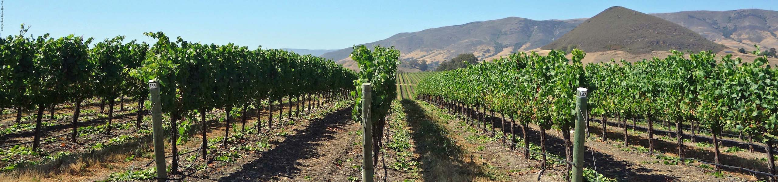 Vineyard Lanes